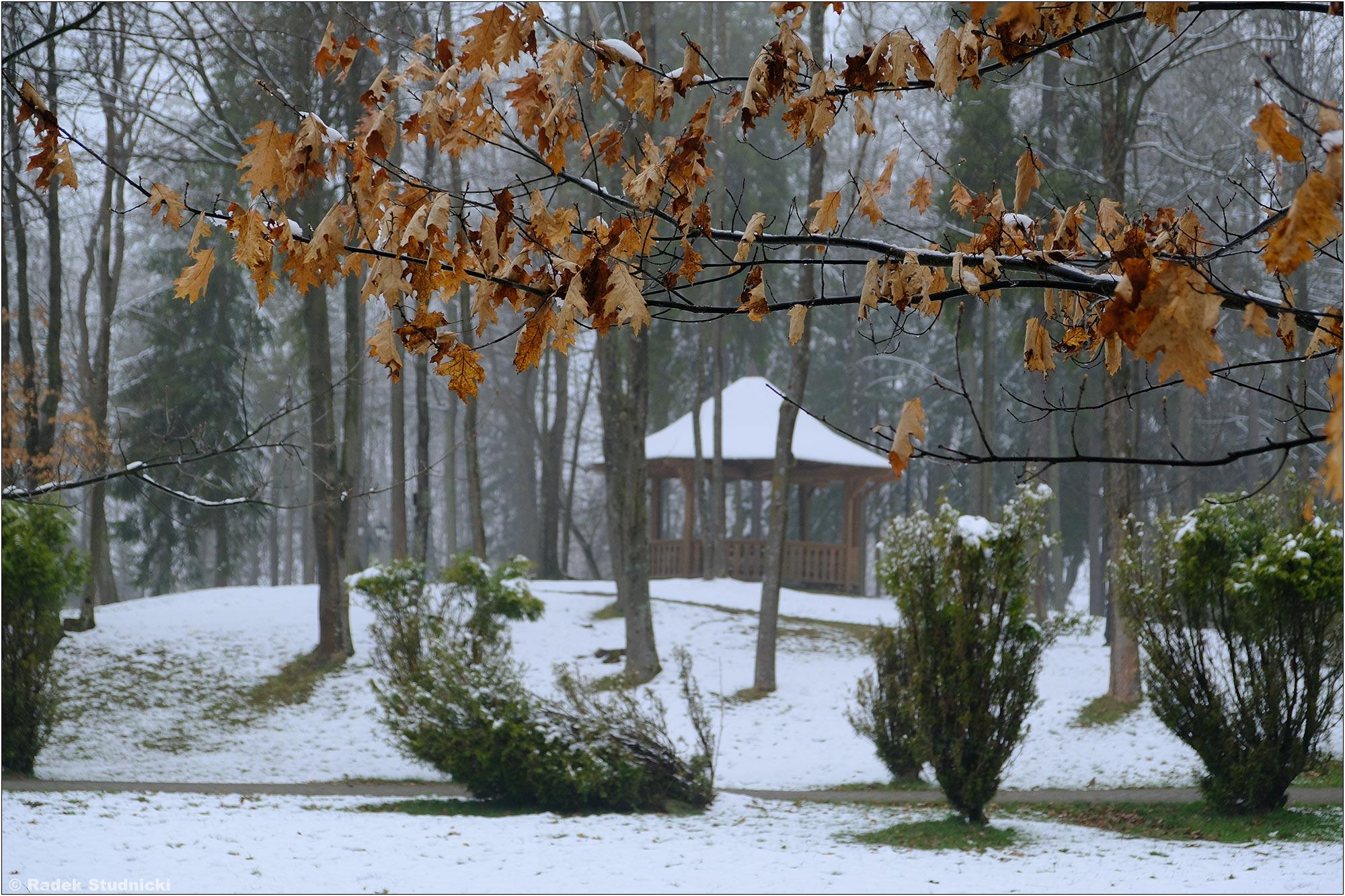 Park zdrojowy w Wysowej-Zdrój