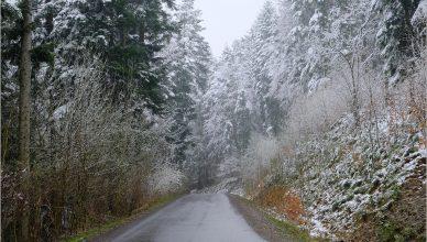 Wiosna w Beskidzie Niskim