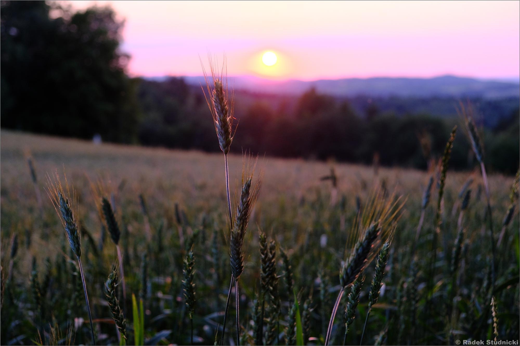 Zachód słońca nad polem