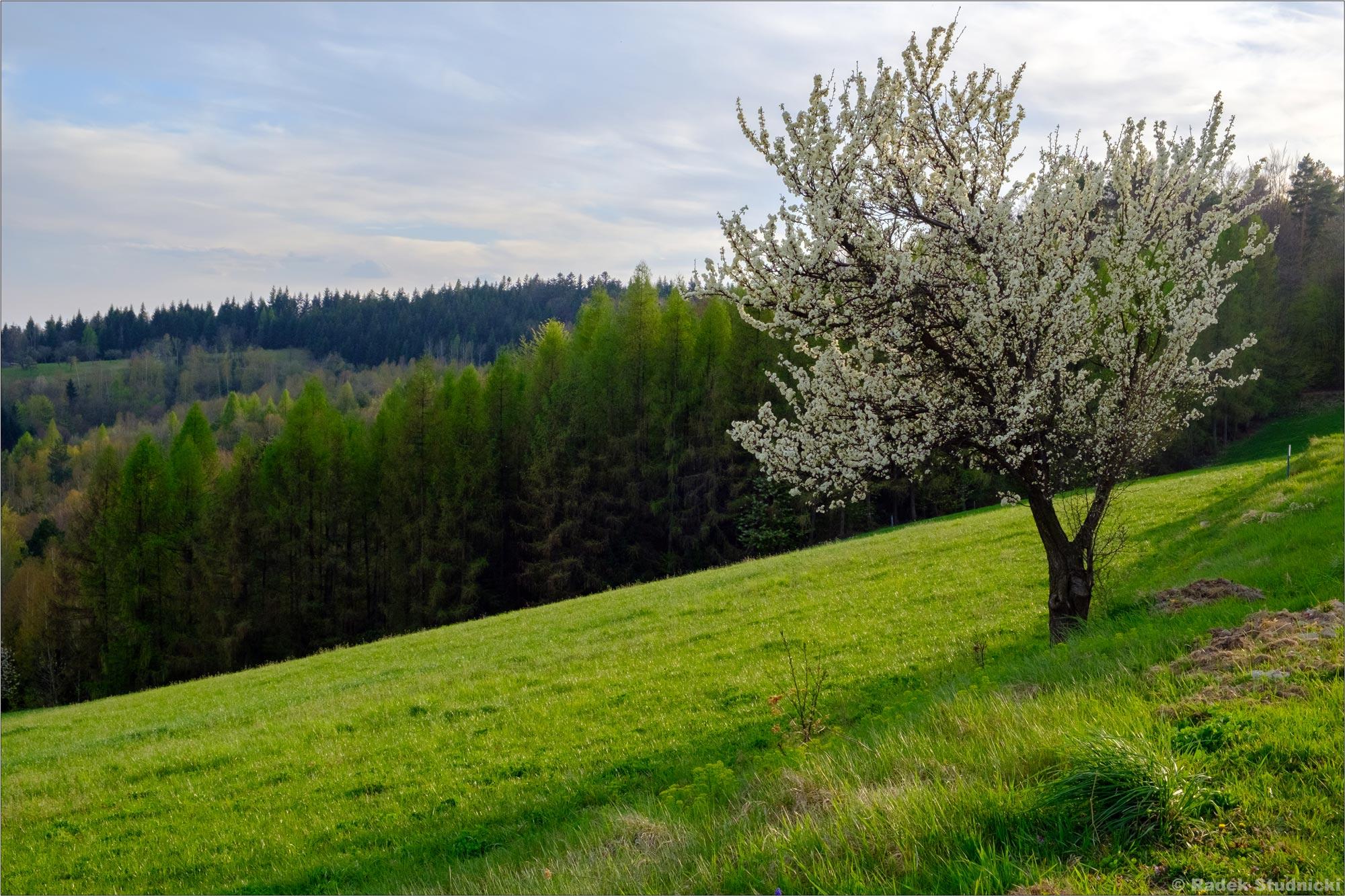 Kwitnąca wiosna w Polsce